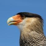 Man Jungle: il tronco avvoltoio