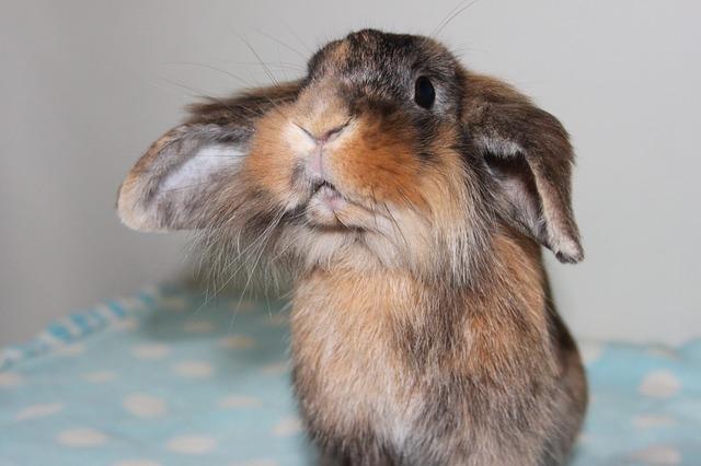 rabbit-968550_640