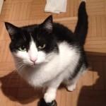 Intervista a Capomicio di Progetto Kitten