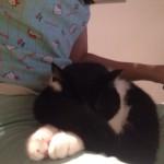 Prandy, gatto felinamente idiota