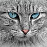 17 febbraio, festa nazionale del gatto. Ecco perché festeggiarci