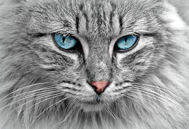 festa nazionale del gatto