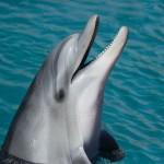 Man Jungle e gli uomini da evitare: il Delfino Audace